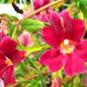 Post Thumbnail of De jolies fleurs pour un joli sommeil... Fleurs de Bach Sommeil Garanti !